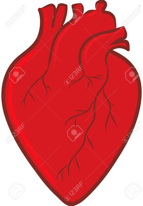 12 best images about you on pinterest heart te amo mi cute anatomical heart images best 25 heart drawings ideas