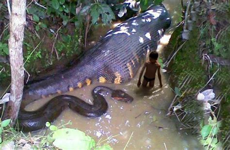 crazy animal images snakes        chew