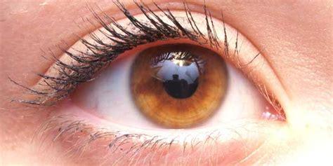 imagenes de ojos zarcos colores de ojo los 5 m 225 s sorprendentes y poco comunes