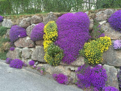 fiore da giardino fiori primaverili da giardino blazondentalmarketing