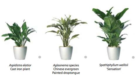 bathroom plants no light rent indoor plants that require low light from ambius