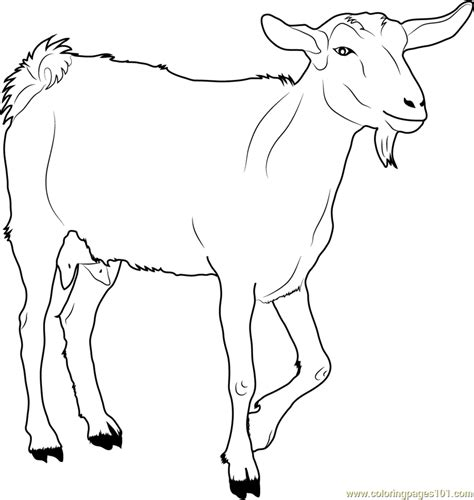 goat coloring pages white goat coloring page free goat coloring pages