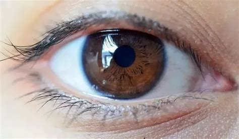 what is the most common eye color what s the most common eye color in india quora