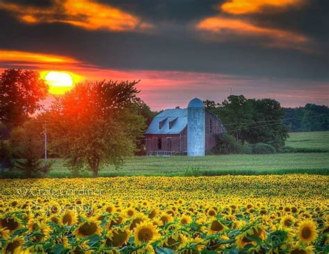 Cool Barn Designs Sunset Over An Allegan Farm With Sunflower Field Pure