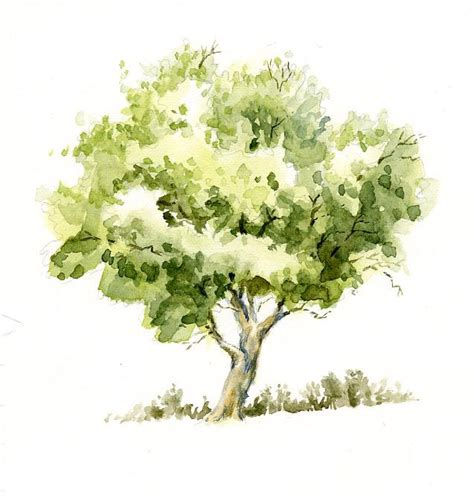 water color tree 25 best ideas about watercolor trees on