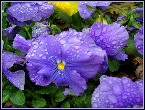 imagenes de rosas verdes pin verdes flores moradas pictures on pinterest