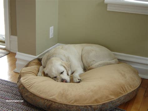 kirkland dog bed 404 page not found