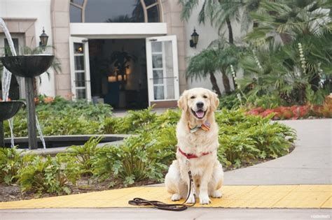 Book Your Travel To Dreamland Pet Pet Pet Product by 5 Reasons To Stay At Pet Friendly Kona Resort San