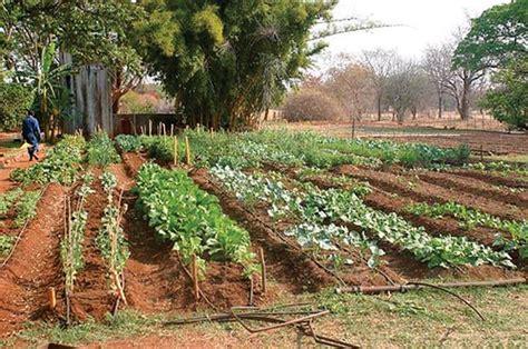 orto e giardino biologico coltivare orto biologico orto biologico come coltivare