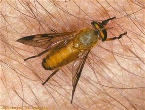 sand fliese other pests south walton county mosquito district