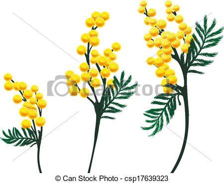 mimosa clipart illustration vecteur de mimosa fleurs csp17639323