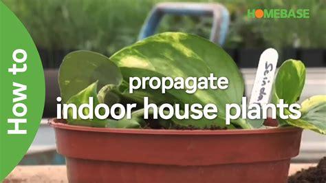garden plants homebase