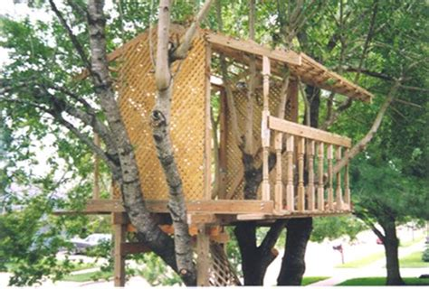 basic tree house plans 129 best images about treehouses on pinterest trees a tree and growing gardens
