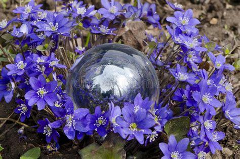 fiore a palla viola palla viola dei fiori della primavera e di cristallo