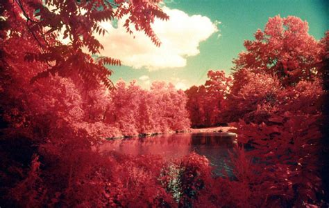 infrared color 35mm infrared fpp color ir 1 roll