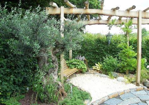 der olivenbaum pflege