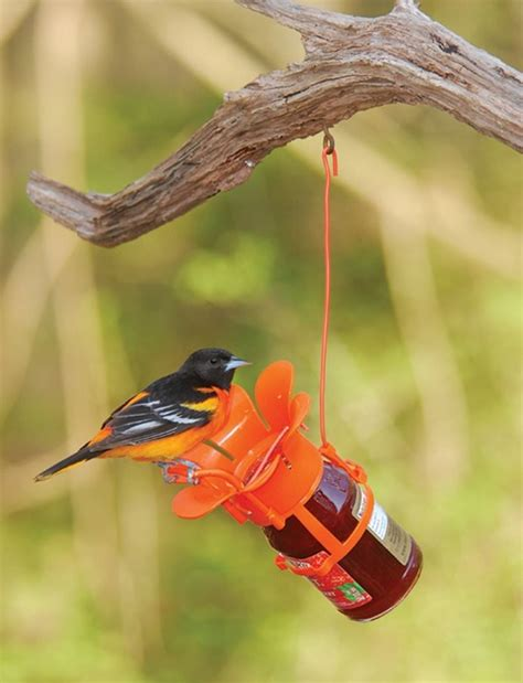 oriole bird feeders feeding the birds
