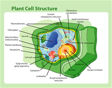 plant cell diagram for 5th grade plant cell 5th grade plant and animal cell webquest