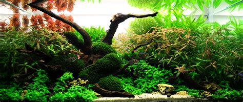 Bubbles Aquarium Aquascapes 2009 Aquascaping Gallery