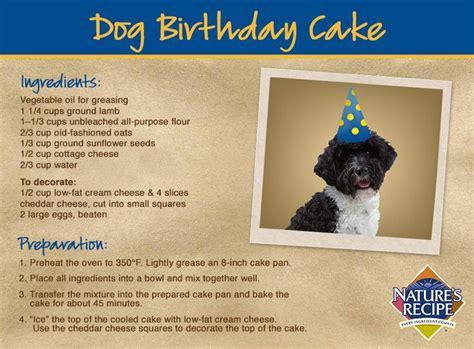 recipe for good smelling dog shoo 1000 images about diy dog care on pinterest the park