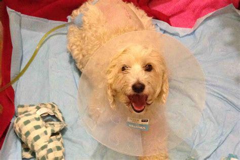 whitney winston dog lick fundraiser by whitney rappana winston wants to walk again