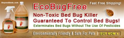 where do bed bugs hide during the day bed bugs what you should know first