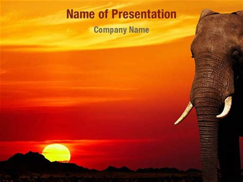 African Themed Powerpoint Template Free Bountr Info Elephant Powerpoint Template