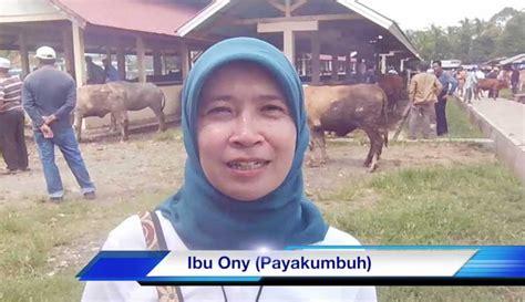 Bibit Sapi Payakumbuh testimoni sapi bagus dari ibu ony kota payakumbuh