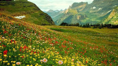 alpina bloemen alpine wilde bloemen hd desktop wallpaper breedbeeld