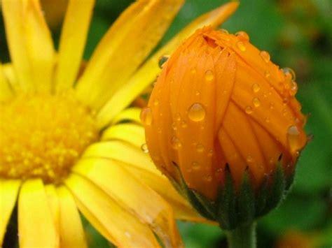 wallpaper gambar bunga indah gambar bunga indah dan cantik gambar foto wallpaper