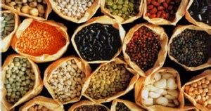 ciri ciri benih tanaman  baik pakar budidaya