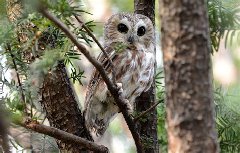 places to go birding owls nyc parks