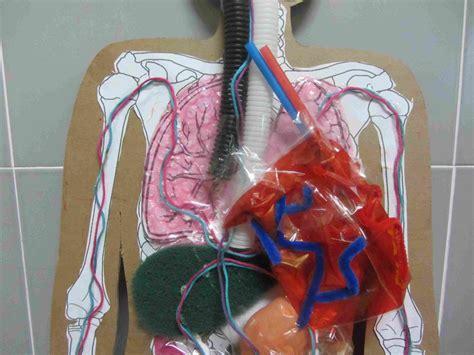 como aser sistema circulatorio con materiales reciclables blog de anillas aparatos respiratorio y circulatorio