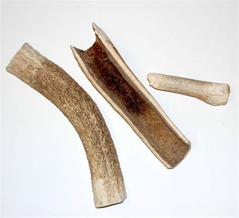 elk antlers for dogs deer antler chew for dogs wow