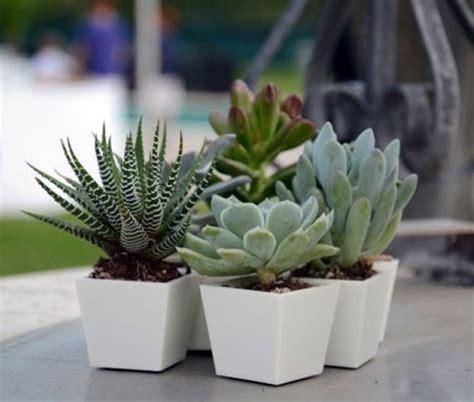 vasi piante grasse caratteristiche dei vasi per piante grasse scelta dei