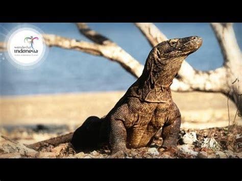wonderful indonesia komodo labuan bajo youtube