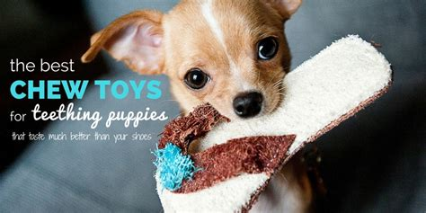 chew toys for teething puppies 4 best chew toys for teething puppies safe toys for chomping on