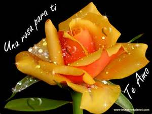 Rosas en movimiento related keywords amp suggestions rosas en
