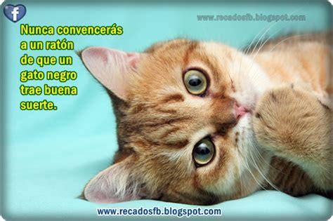 imagenes de amor con gatos imagenes de gatos tristes con frases tattoo design bild