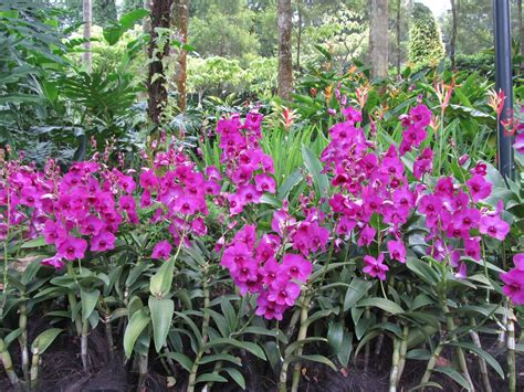 Orchid Garden by The Dilettante Photographer Orchids National Orchid