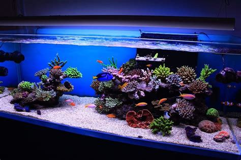 Saltwater Aquascape by Reef Aquascaping On Reef Aquarium Saltwater