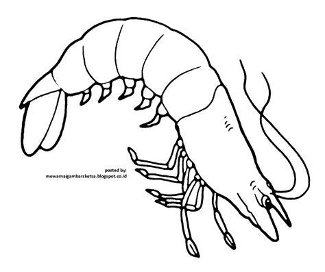 Mewarnai Hewan Laut mewarnai gambar contoh mewarnai gambar hewan