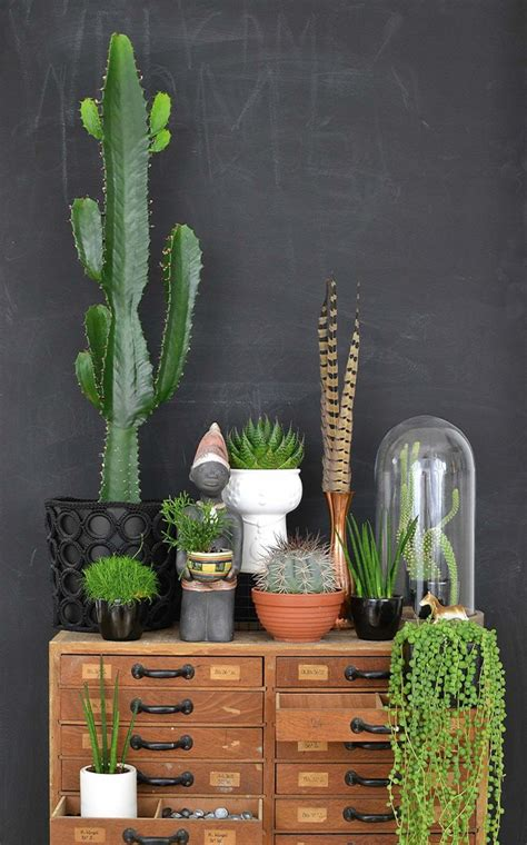 urban jungle interior living  decorating  plants