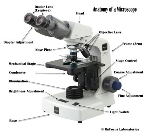 compound light microscope parts and functions parts of a compound microscope with diagram and functions