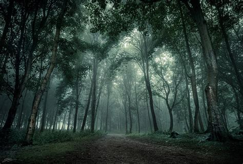 Iron Shadows Path Of The Lost 2 woods by scottsimphotography