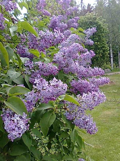 bloemen tule meer dan 1000 idee 235 n over tule bloemen op pinterest