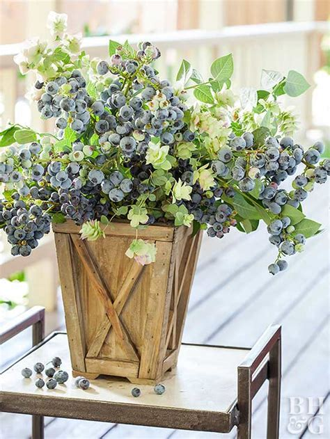 Soil Mix For Container Gardening - berries in containers