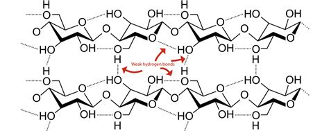 impact of the supramolecular structure of cellulose on the impact of the supramolecular structure of cellulose on the