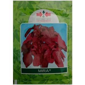 1 Gram Benih Bayam Merah jual benih bayam mira 50 gram murah bibitbunga