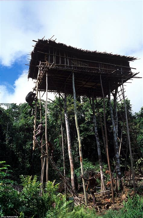 korowai tree houses meet the korowai tribe of new guinea daily mail online